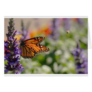 Borboleta de monarca que alimenta o cartão vazio
