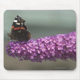 Borboleta de pavão na flor mouse pad