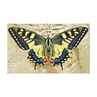 """Borboleta de Swallowtail do tigre na areia 20"""" X12"""