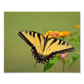 Borboleta de Swallowtail Foto