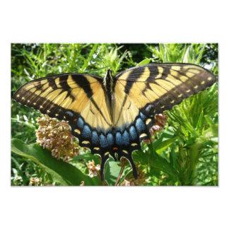 Borboleta de Swallowtail II em Shenandoah Foto