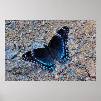 Borboleta de Swallowtail na estrada do cascalho Pôster