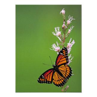 Borboleta e flor de monarca no fundo verde foto