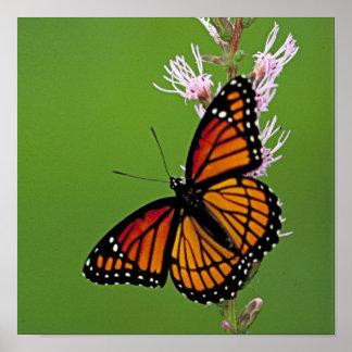 Borboleta e flor de monarca no fundo verde pôster