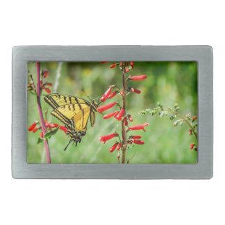 Borboleta e Wildflowers de Swallowtail do tigre