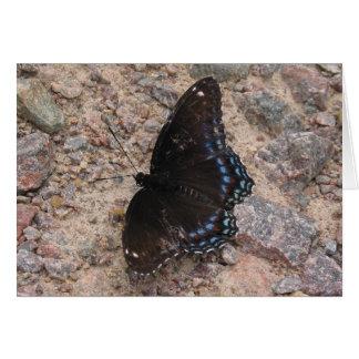 Borboleta em uma estrada rochosa cartão comemorativo