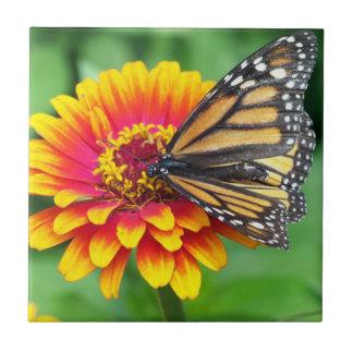 Borboleta em uma flor azulejo