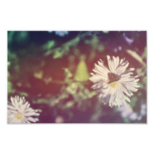Borboleta em uma flor branca foto