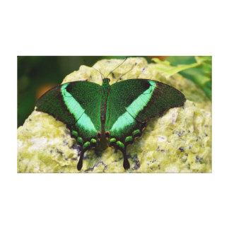 "Borboleta esmeralda de Swallowtail 20"" X12 """
