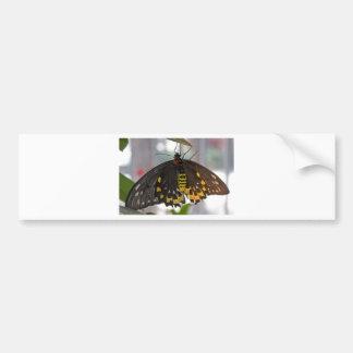 borboleta grande adesivos