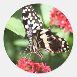 Borboleta listrada da zebra adesivo