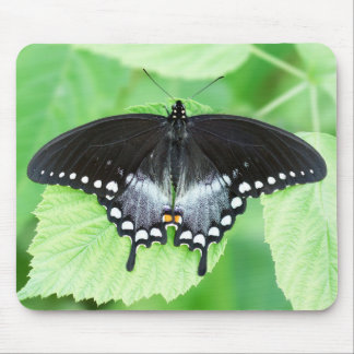 Borboleta Mousepad de Spicebush Swallowtail