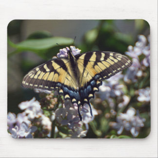 Borboleta Mousepad de Swallowtail do tigre