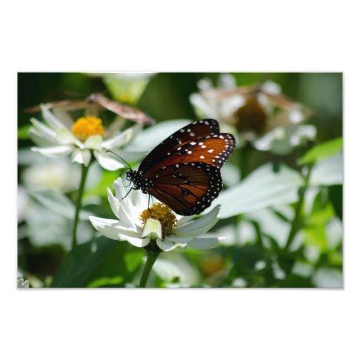 Borboleta na flor branca foto arte