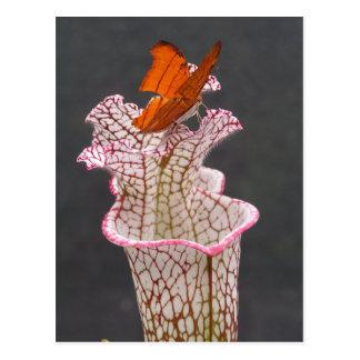 Borboleta no cartão da foto do leucophylla do