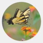 Borboleta oriental de Swallowtail do tigre Adesivos
