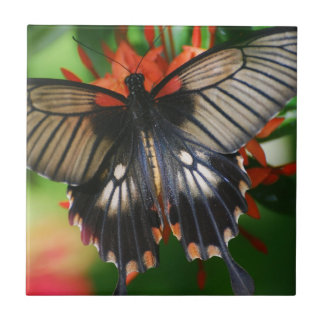 Borboleta perfeita de Swallowtail Azulejos De Cerâmica