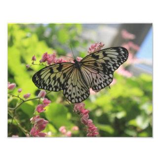 Borboleta preto e branco na flor cor-de-rosa impressão de foto