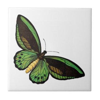 Borboleta verde bonita azulejos de cerâmica