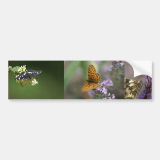 borboletas adesivo