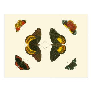 Borboletas brilhantes por Pieter Cramer Cartão Postal