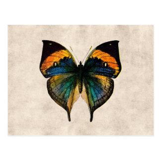 Borboletas da ilustração 1800's da borboleta do cartão postal