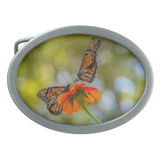 Borboletas de monarca em Wildflowers