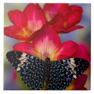 Borboletas tropicais 2 de Sammamish Washington Azulejos De Cerâmica