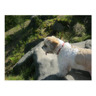 Borda do penhasco do cão de Ollie Cartão Postal