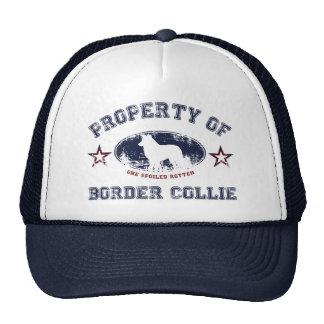 Border collie boné