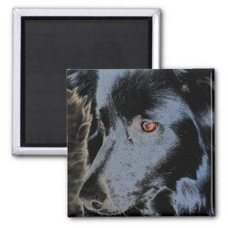 Border collie preto enfrenta o ímã do cão ímã quadrado