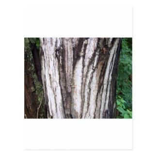 Bordo da floresta cartão postal