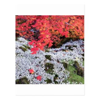 Bordo e líquenes de videira do outono cartão postal