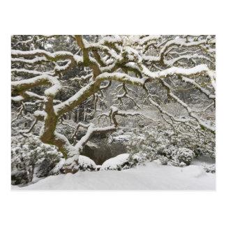 Bordo japonês coberto de neve 2 cartão postal