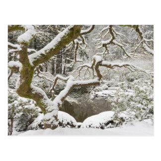 Bordo japonês coberto de neve cartão postal