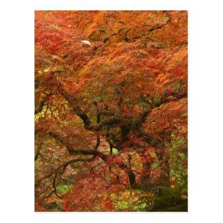 Bordo japonês na cor 4 da queda cartão postal