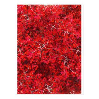 Bordo vermelho e noz cartao postal