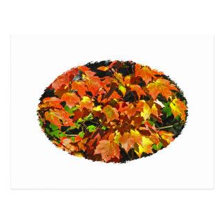 Bordo vermelho (outono) cartao postal