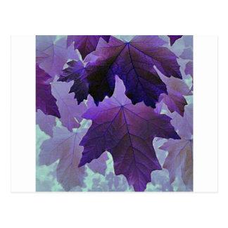 Bordo violeta cartão postal