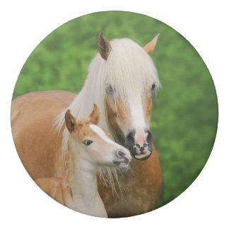 Borracha Foto bonito da mãe do beijo do potro dos cavalos