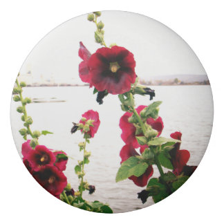 Borracha Hollyhock bonito floral