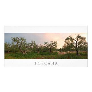 Bosque da oliveira no cartão com fotos do por do