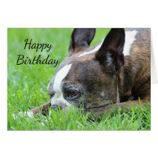 Boston Terrier Cartão Comemorativo