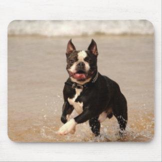 Boston Terrier na praia Mousepad