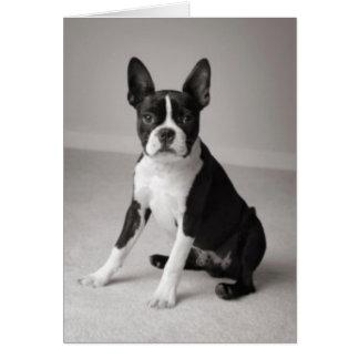 Boston Terrier que senta o cartão de nota