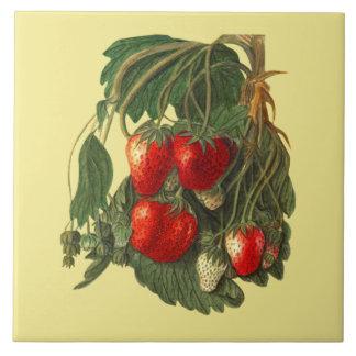 ~ botânico da cozinha do ~ do azulejo do ~ da