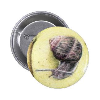 Botão do caracol bóton redondo 5.08cm