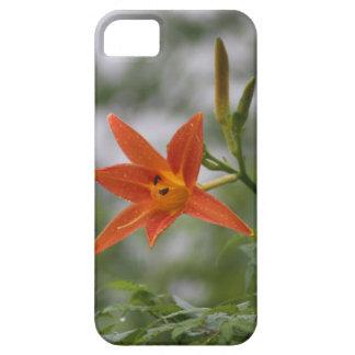 Botão do lírio de tigre & flor chineses da flor capa para iPhone 5