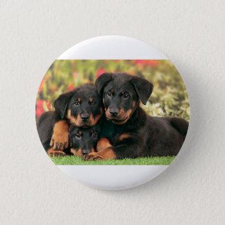 Botões dos filhotes de cachorro de Beauceron os Bóton Redondo 5.08cm