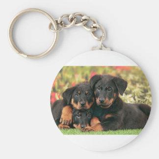 Botões dos filhotes de cachorro de Beauceron os Chaveiro